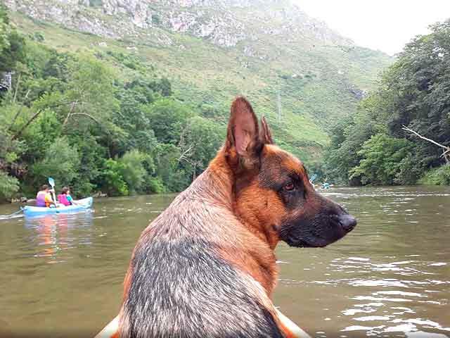 Foto de perro pastor alemán en canoa