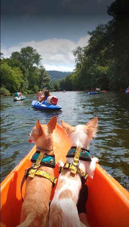 Información bajada del río Sella con perros en canoa